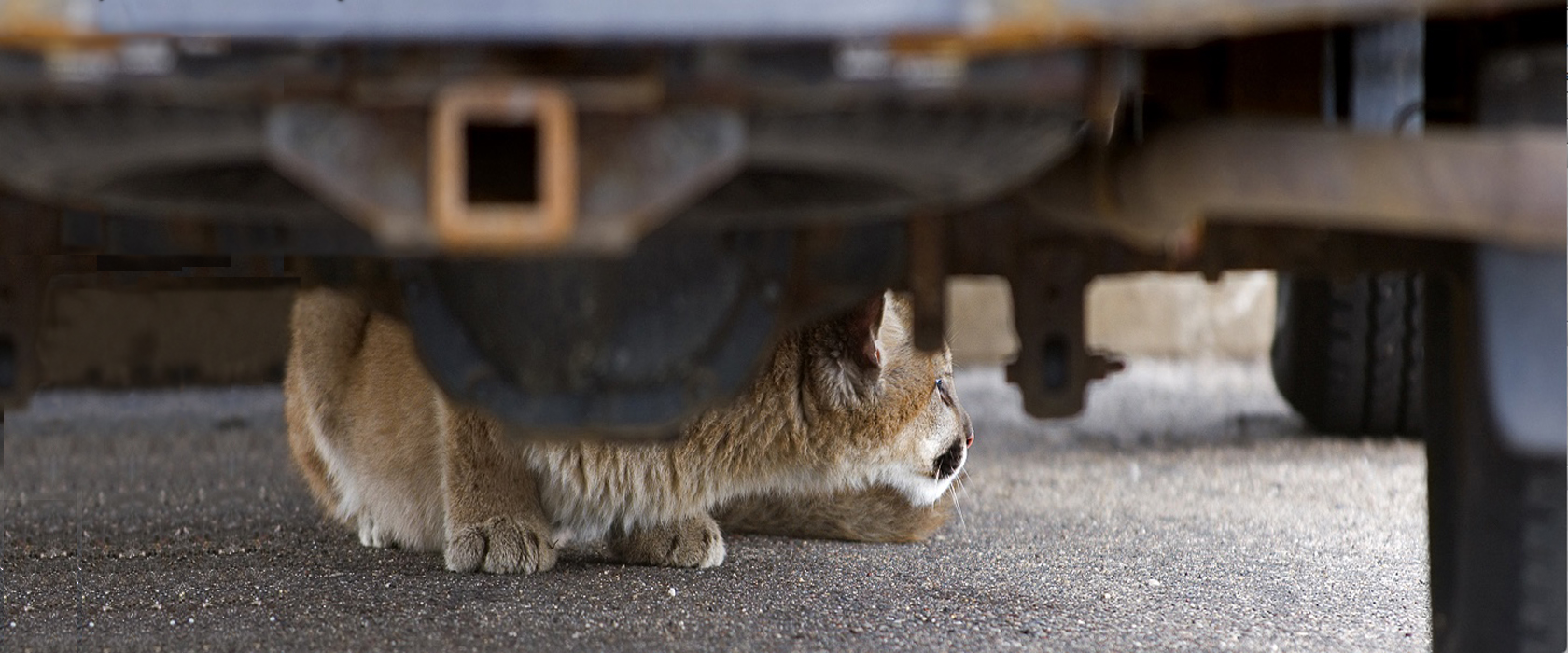 Mt Lion under car