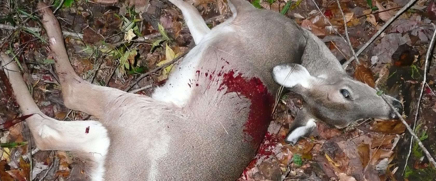 4 Dead Deer